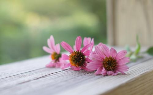 Best Flowers Wallpaper For Desktop